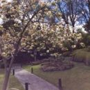Melbourne Zooで桜