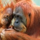 Mother's Day, Perth Zoo, 入場無料♪