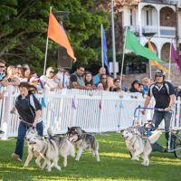 家族で楽しめる ≪Dog≫ イベント【North Sydney】